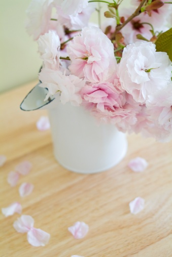 桜「Cherry blossoms in jug」:スマホ壁紙(14)