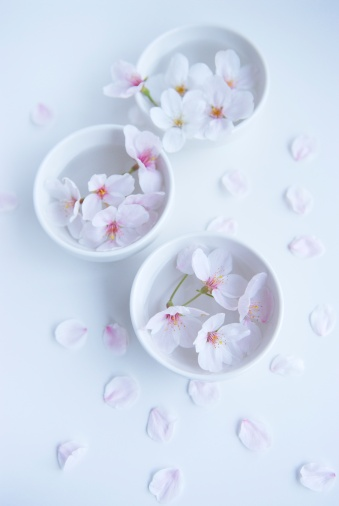 桜「Cherry blossoms in bowl」:スマホ壁紙(9)