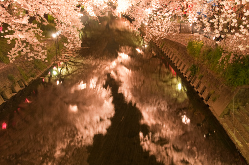夜桜「Cherry Blossom Trees at Gogo River」:スマホ壁紙(7)