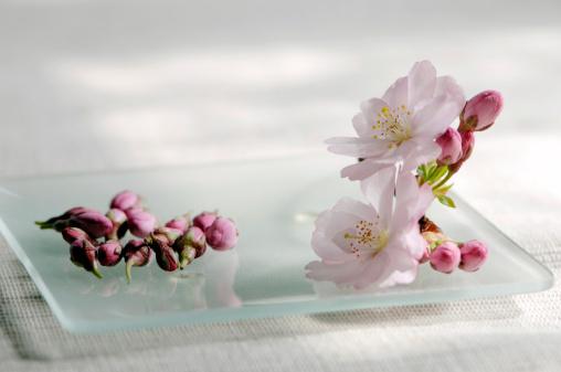 Feng Shui「Cherry blossom, close-up」:スマホ壁紙(19)