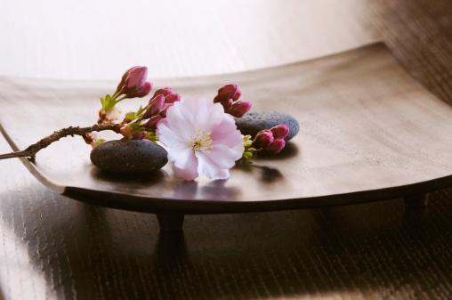 Feng Shui「Cherry Blossom Close-up」:スマホ壁紙(16)