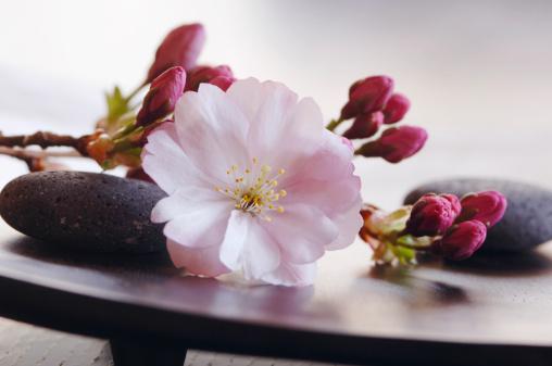 Feng Shui「Cherry Blossom Close-up」:スマホ壁紙(15)
