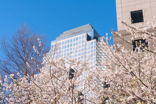 桜「Cherry blossoms at front of World Financial Center at Lower Manhattan New York City.」:スマホ壁紙(19)