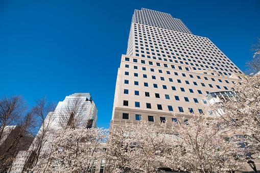 桜「Cherry blossoms at front of World Financial Center at Lower Manhattan New York City.」:スマホ壁紙(4)