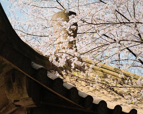 桜「cherry blossom with pavilion」:スマホ壁紙(9)