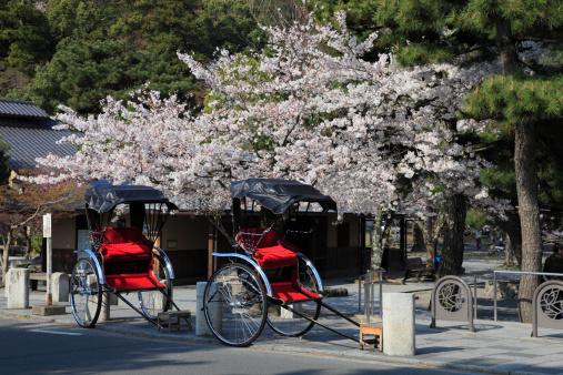 Arashiyama「Cherry Blossoms and Rickshaw at Arashiyama, Kyoto, Kyoto, Japan」:スマホ壁紙(12)