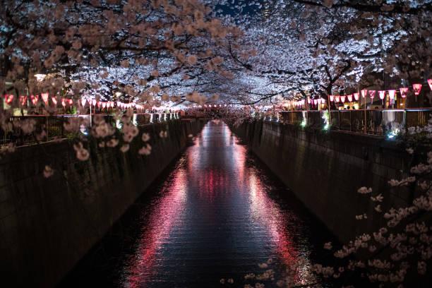 People Enjoy Cherry Blossom In Tokyo:ニュース(壁紙.com)
