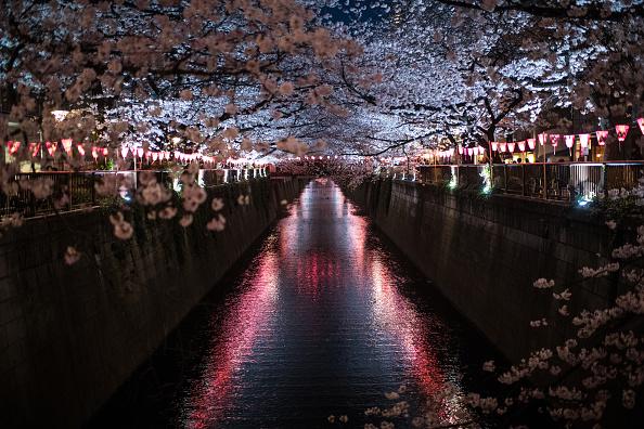 桜「People Enjoy Cherry Blossom In Tokyo」:写真・画像(15)[壁紙.com]