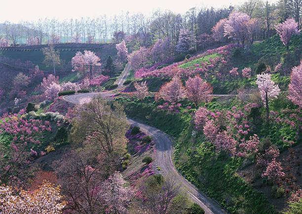 Cherry Blossom and Road:スマホ壁紙(壁紙.com)