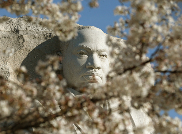 Cherry Blossom「Cherry Blossoms Begin To Bloom In Washington, DC」:写真・画像(15)[壁紙.com]