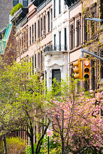 Vertical「Cherry blossoms tree and fresh green trees at front of rows of Upper Manhattan residential buildings at New York City. Traffic signal stands at Madison Avenue.」:スマホ壁紙(10)