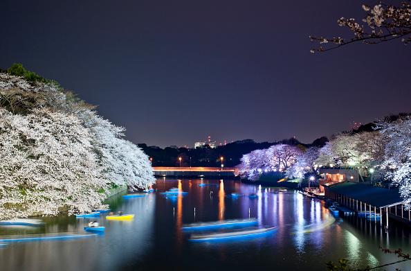 夜桜「Cherry Blossom In Full Bloom In Tokyo」:写真・画像(2)[壁紙.com]