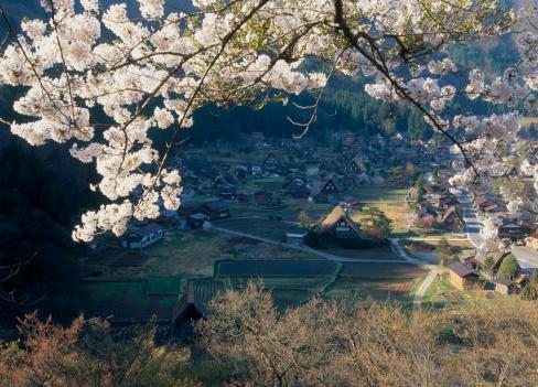 Cherry Blossom「Cherry Blossoms and Shirakawa-go, Shirakawa, Ono, Gifu, Japan」:スマホ壁紙(7)