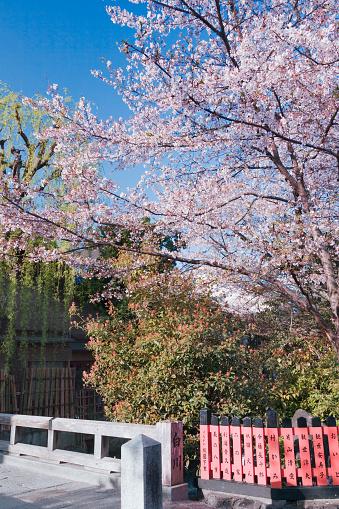 桜「Cherry Blossom Trees」:スマホ壁紙(2)