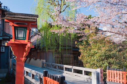 Footbridge「Cherry Blossom Trees」:スマホ壁紙(15)