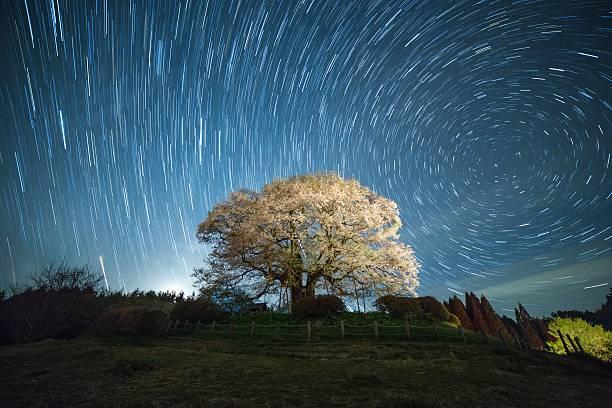 桜の花ツリー夜にの下、north つ星:スマホ壁紙(壁紙.com)