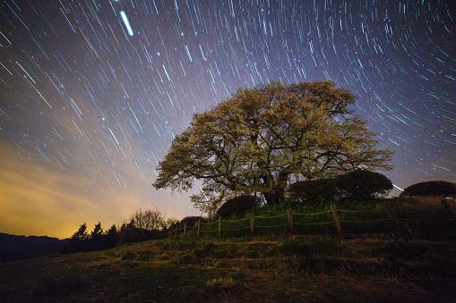 夜桜「桜の花ツリー夜にの下、north つ星」:スマホ壁紙(8)