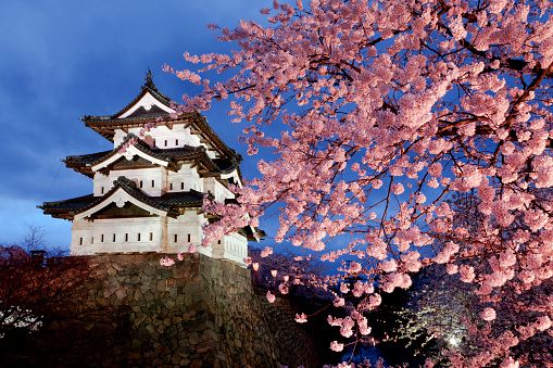 夜桜「Cherry blossoms at Hirosaki Castle, Aomori Prefecture, Honshu, Japan」:スマホ壁紙(16)