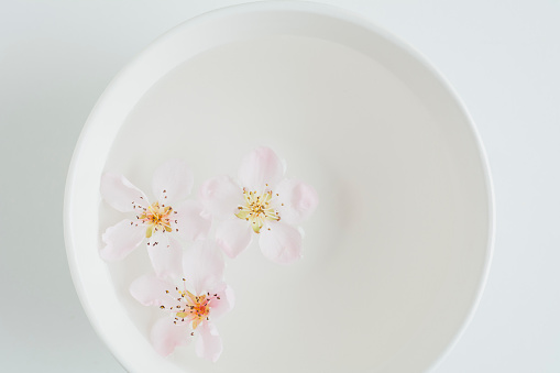 桜「Cherry Blossoms floating in white bowl on white」:スマホ壁紙(14)