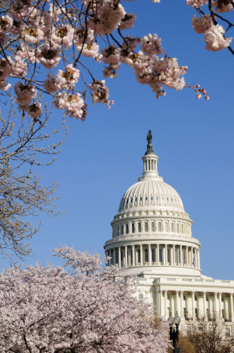 Legislation「Cherry blossoms and US Capitol Building in Washington DC」:スマホ壁紙(3)