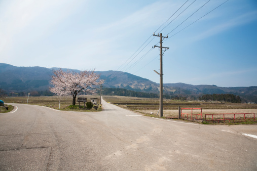 桜「Cherry blossom tree and roads, Toyama Prefecture, Honshu, Japan」:スマホ壁紙(15)
