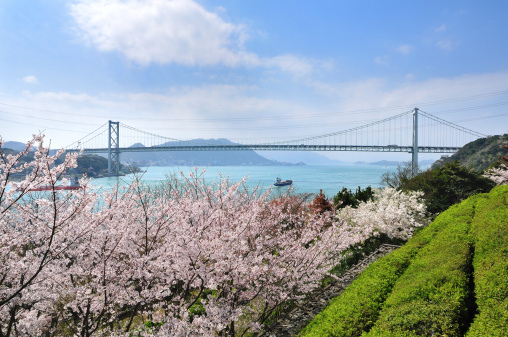Grove「Cherry Blossoms and Kanmonkyo Bridge」:スマホ壁紙(9)