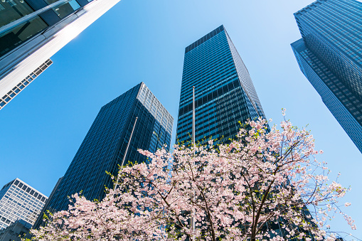 Avenue「Cherry blossoms tree stands among the Park Avenue Midtown Manhattan skyscrapers, which are illuminated by sunlight at New York USA on Apr. 14 2018.」:スマホ壁紙(17)