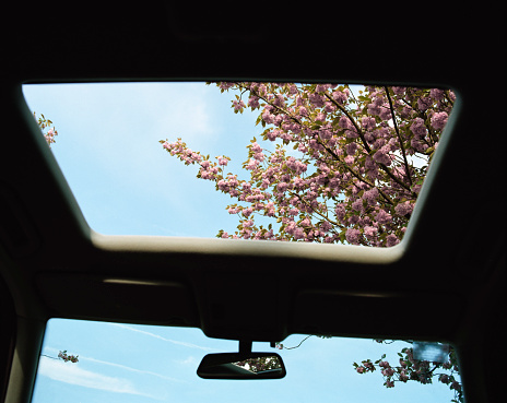 Cherry Blossoms「Cherry blossom, view through car sun roof, low angle view」:スマホ壁紙(10)