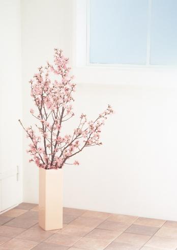 桜「Cherry Blossom」:スマホ壁紙(2)