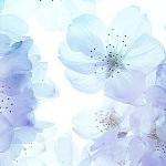 花カテゴリー(壁紙.com)