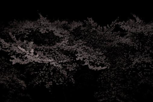 夜桜「cherry blossoms」:スマホ壁紙(1)