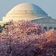桜祭り壁紙の画像(壁紙.com)