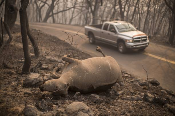 カリフォルニア州「Multiple Wildfires Continue To Ravage Through California Wine Country」:写真・画像(5)[壁紙.com]