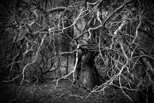 Evil「Sinister and Spooky Tangle of Vines and Tree Branches」:スマホ壁紙(3)