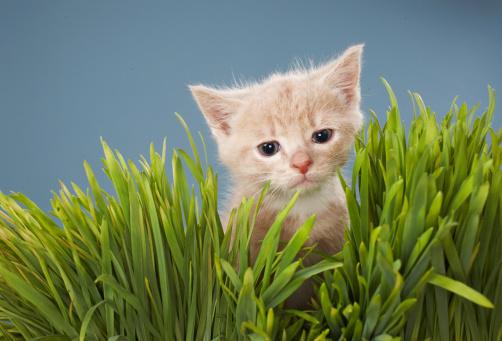 Kitten「Kitten in grass」:スマホ壁紙(7)