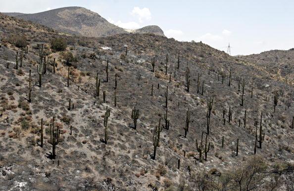 Arizona「Wildfires Burn In Western U.S.」:写真・画像(1)[壁紙.com]