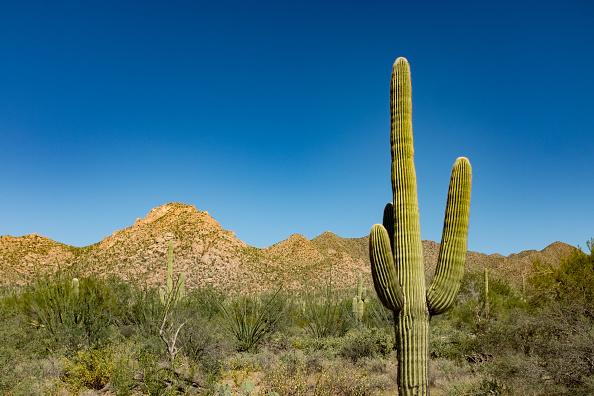 Desert Area「Sagauro Cactus」:写真・画像(8)[壁紙.com]