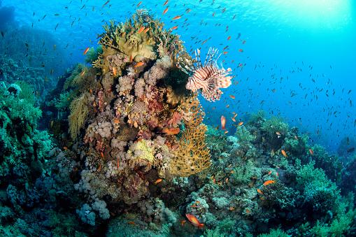 Aquatic Mammal「School of goldfish surrounding coral with a sea lion」:スマホ壁紙(17)