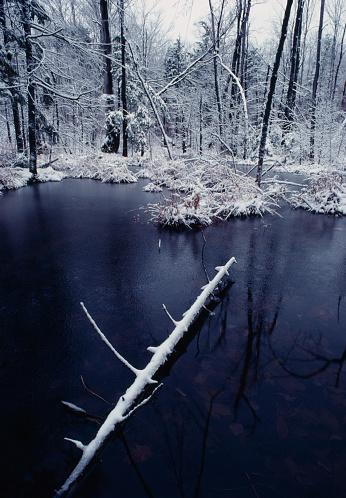 Fallen Tree「Snow-covered log in water」:スマホ壁紙(3)