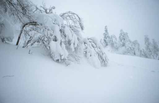 Drooping「Snow-covered trees in winter wilderness in Quebec, Canada」:スマホ壁紙(8)