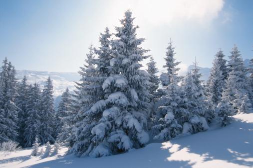 雪山「Snow-covered trees and mountains」:スマホ壁紙(18)