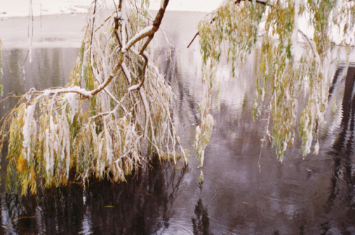 Drooping「Snow-covered willow drooping in winter」:スマホ壁紙(15)