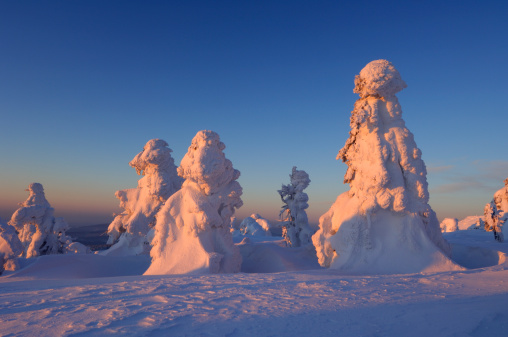 Harz Mountain「Snow-covered Norway spruce trees」:スマホ壁紙(16)