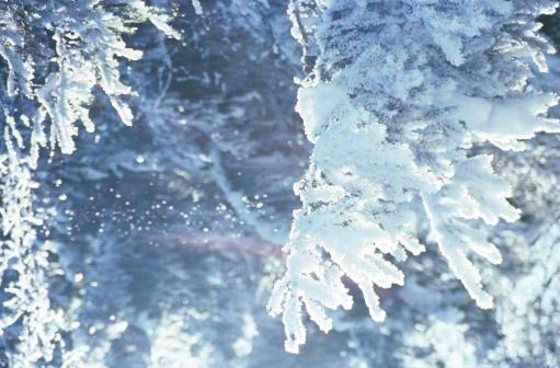 雪の結晶「Snow-covered fir branches」:スマホ壁紙(14)