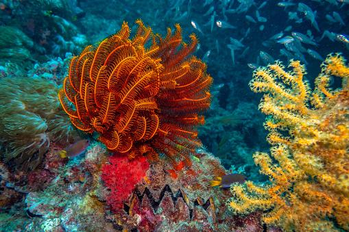 Queensland「Sea life on the Great Barrier reef」:スマホ壁紙(3)