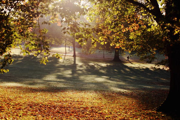 葉・植物「Autumn Colours Throughout The UK」:写真・画像(15)[壁紙.com]