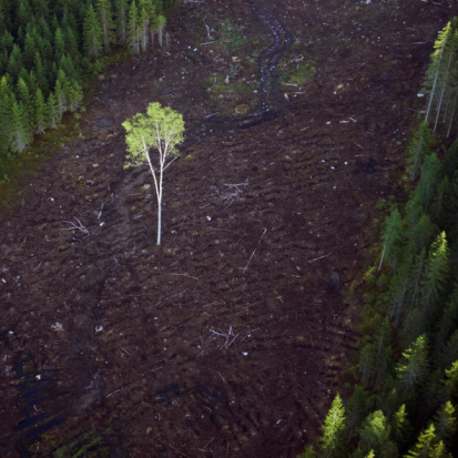 Deforestation「Lone birch tree in clear-cut section of forest, aerial view」:スマホ壁紙(1)