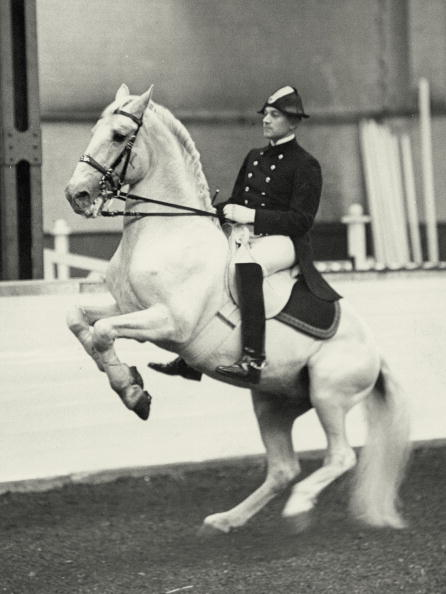 Dressage「Training for the olympic games in Berlin in the Spanish Riding School, Photograph, Vienna, 28th May 1936」:写真・画像(0)[壁紙.com]