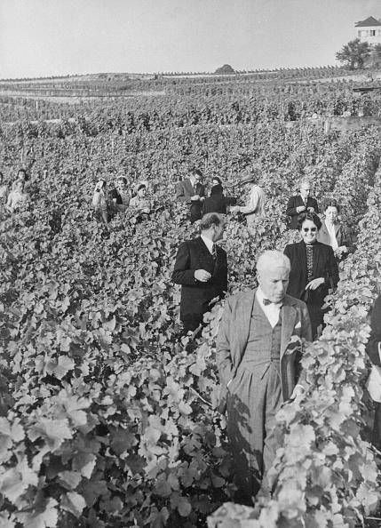 Vaud Canton「Wine Buff」:写真・画像(12)[壁紙.com]