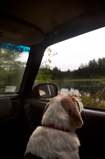 Adirondack Mountains「Pet Dog Looking Outside The Window Of A Car During A Road Trip To Adirondacks」:スマホ壁紙(9)